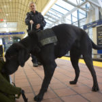 Image of Officer with K-9